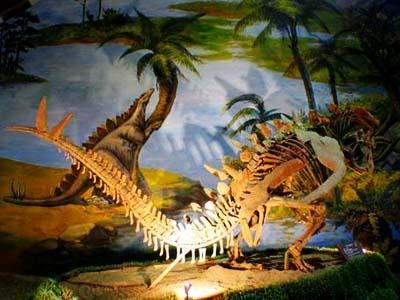 多彩恐龙世界之二楼展厅(组图)图片