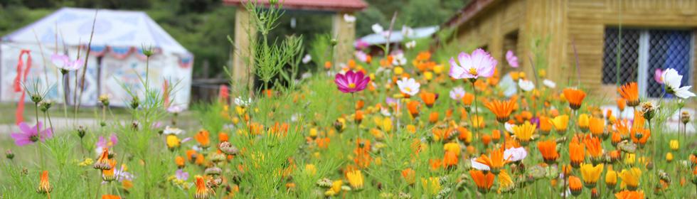 西藏最美赏花地 西藏林芝雪域江南,梦中仙境鲁朗花海