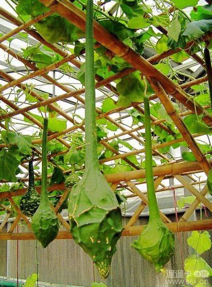 如:珍奇瓜果园,温室无土种植水果园,沙漠植物园,小鸟乐团,蝴蝶兰生产