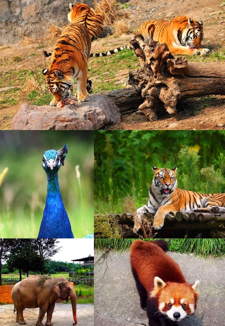 雅戈尔动物园景点4