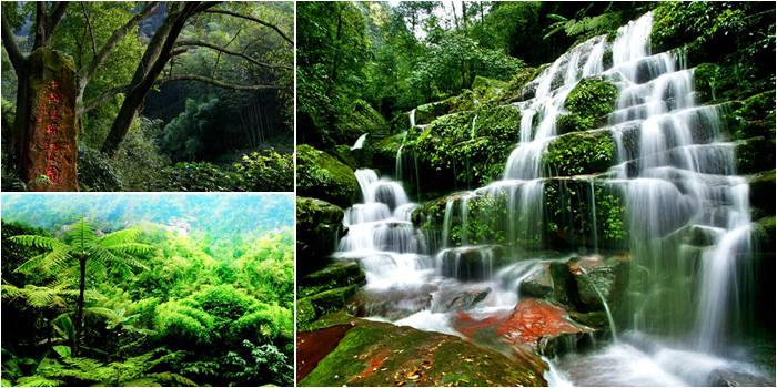 中国侏罗纪公园(原名赤水桫椤国家自然保护区)