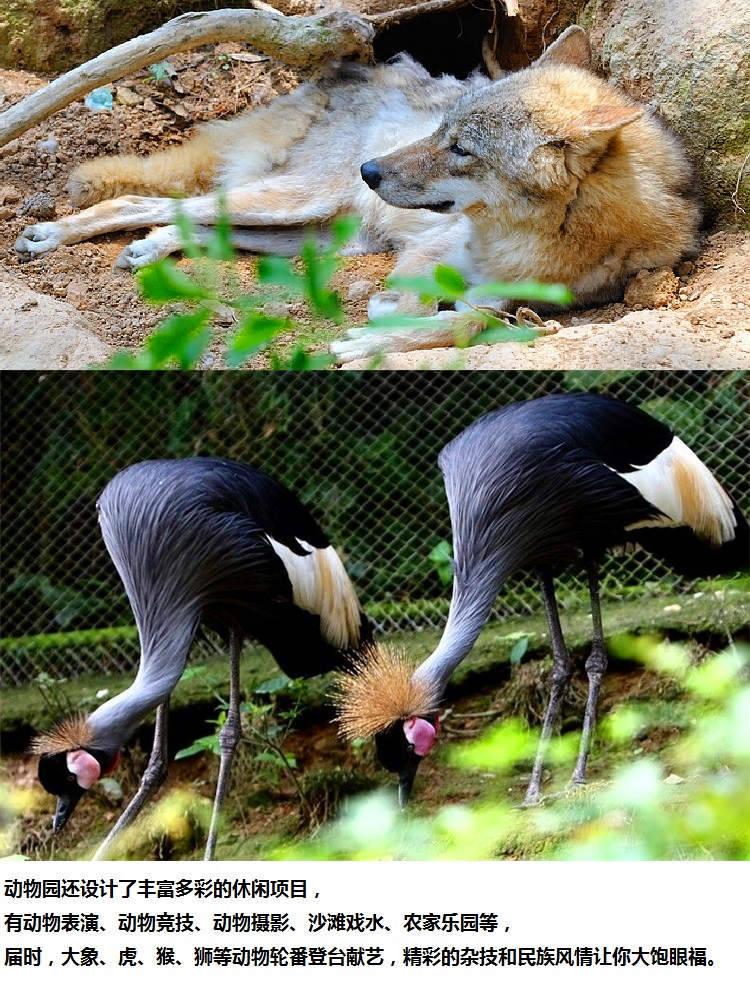雅戈尔动物园景点5