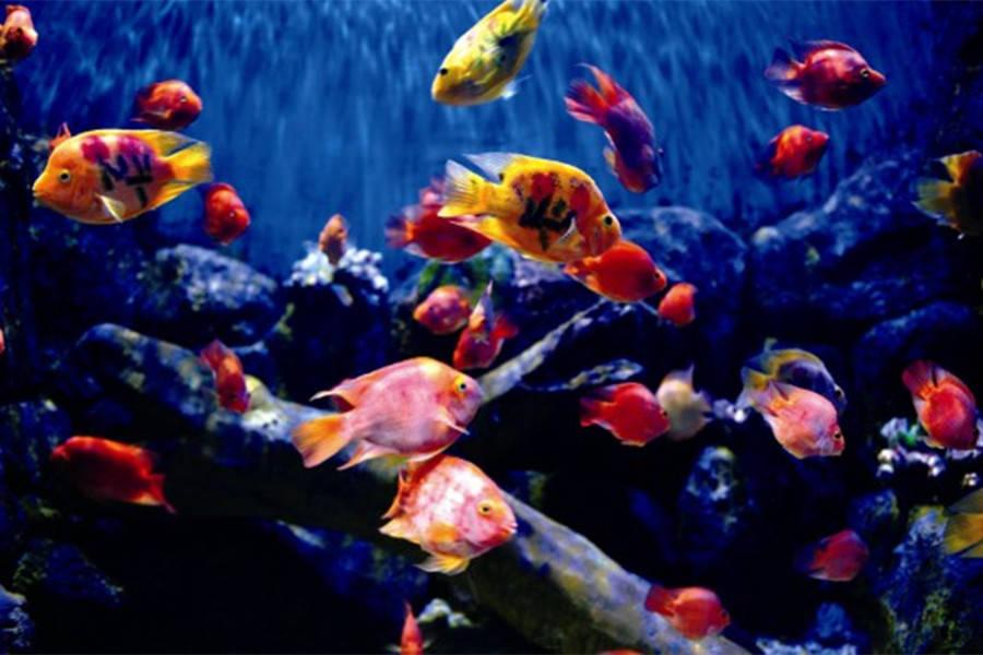 壁纸 动物 海底 海底世界 海洋馆 水族馆 鱼 鱼类 900_600