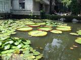 西双版纳热带花卉园
