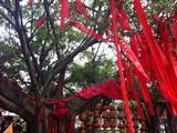 刘三姐景观园