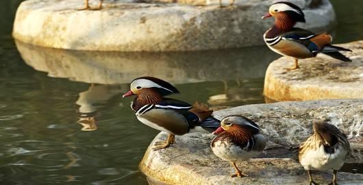 长隆 团购_南沙水鸟世界生态公园门票价格_广州南沙水鸟世界生态公园门票 ...