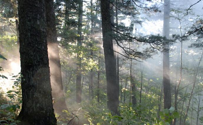五营国家森林公园门票价格 团购 多少钱 特价 驴妈妈门票