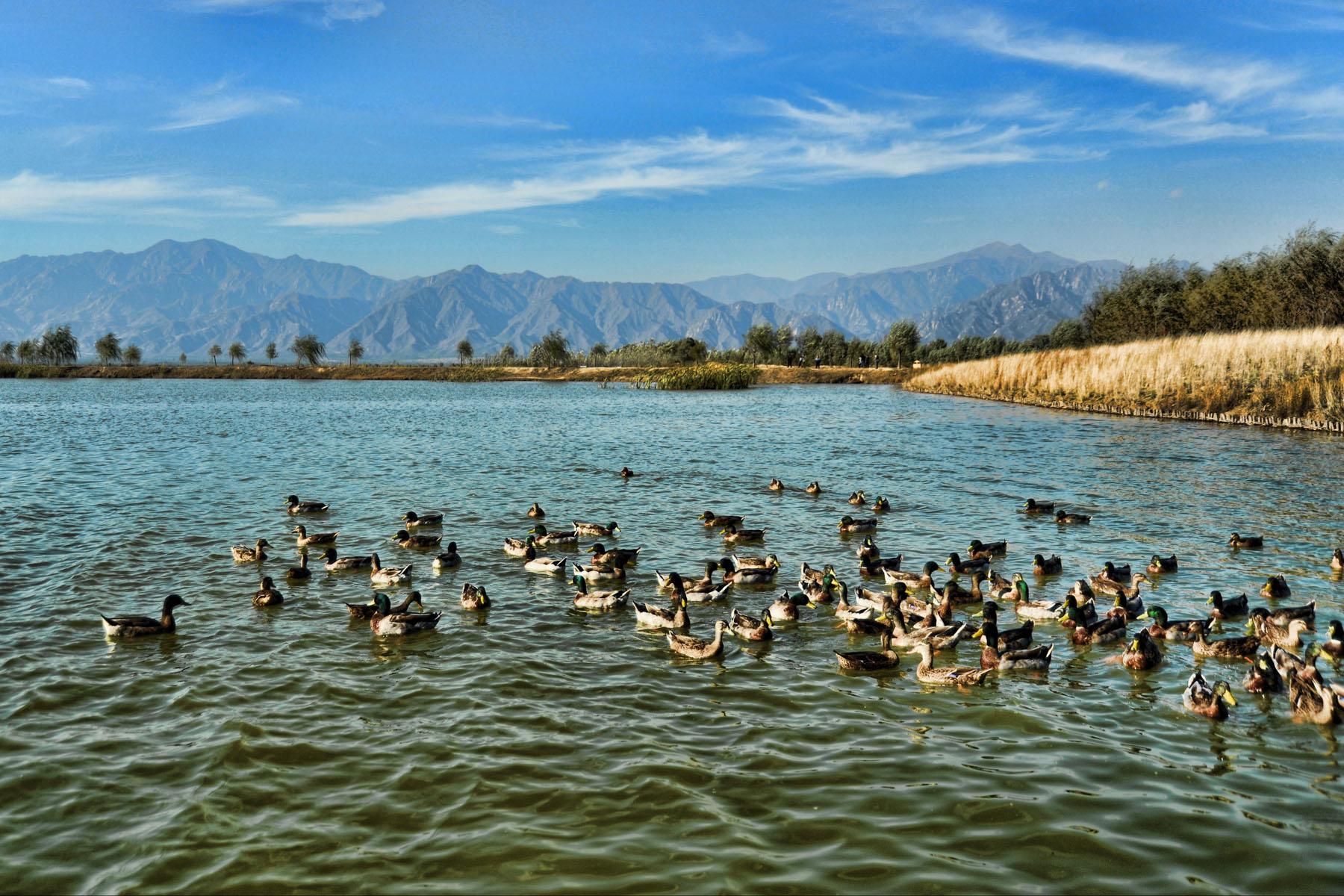 洋湖湿地公园排水图