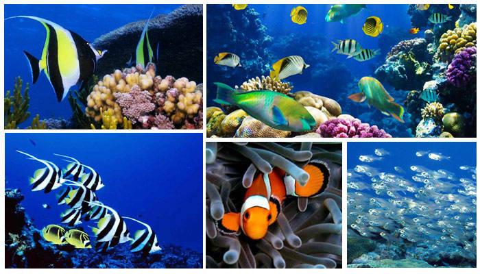 太平洋海底世界太平洋海底世界