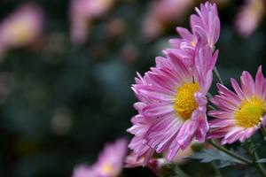 【我要做驴神】天凉好个秋-南京中山植物园