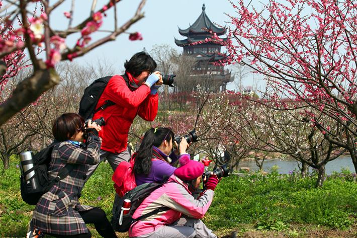 有梅花节的中国人_上海梅花节