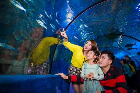 武汉市海洋公园_东湖海洋世界门票价格_东湖海洋世界门票团/预订【驴妈妈门票】