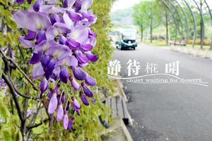 【我要做驴神】上海辰山植物园,阴雨天去兜了一圈,人少,花多,景也不错
