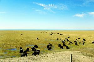 【我要做驴神】青藏线的火车之旅