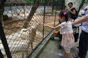 【我要做驴神】深圳:春天的故事——夏天我来寻找