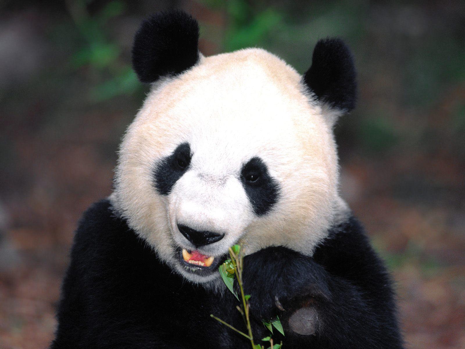 北京海洋馆熊猫馆