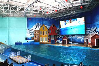 海豚表演馆 @曲江海洋极地公园官网