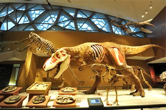 演化之道 @上海自然博物馆官网