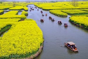 【旅行不要停】水网交织的生态兴化
