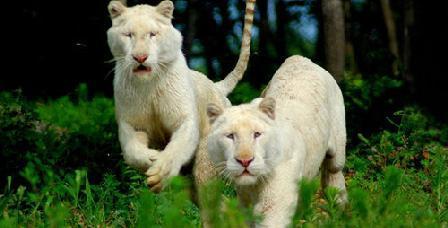 北方森林动物园门票_北方森林动物园门票价格_北方森林动物园门票团/预订【驴妈妈