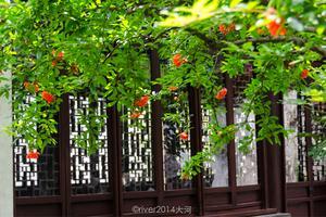 【我是达人】水乡苏州,千年古镇百年园林。