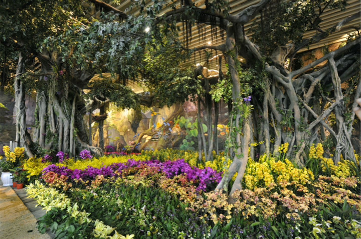 亚洲団地妻_单体温室花园,婕珞芙,怡美天香亚洲种质资源示范区,同时这里也是中国