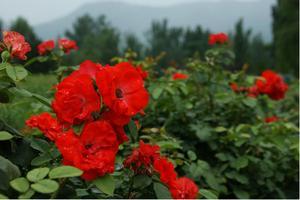 静赏花花世界