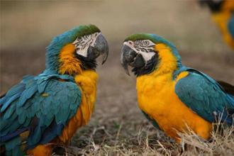 金刚鹦鹉 @上海野生动物园官网