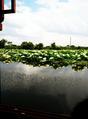 湖州德清下渚湖