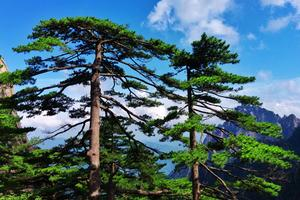 【我是达人】山行记——黄山,井冈山之行