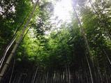 西递+木坑竹海