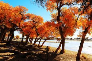 【我是达人】一路向西,追寻额济纳的秋色