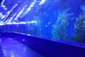 海洋馆奇妙夜—我和女儿的梦幻之旅(游记分享)