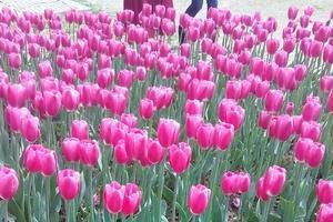 三月相约石象湖看花
