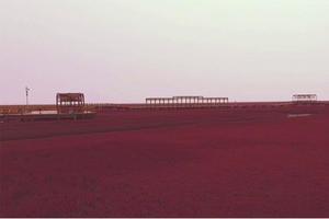 """【一写就""""惠""""】盘锦红海滩风景区"""