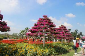 【晒游记】摄影爱好者的天堂,周浦花海,花开正好