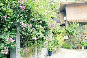 【我是达人】在冲绳的日子
