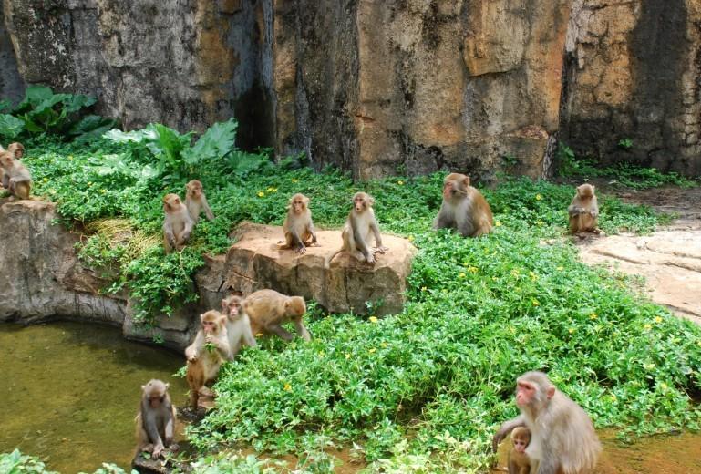 亚洲第一猴山 @海南热带野生动植物园官网