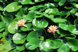 【我是达人】【武汉】木兰草原一日游