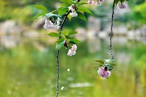 """【一写就""""惠""""】休闲好去处——上海植物园"""