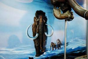 【享泡温泉】自然博物馆,了解古哺乳动物
