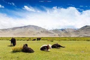 【我是达人】三万里路云和月 II【新藏线南进北出】