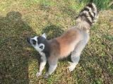 我看动物世界配狗