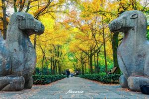 【我是达人】【南京&钟山】秋季的金陵城要如何不爱你