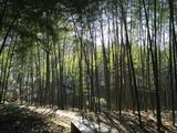 常熟虞山国家森林公园