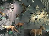 中国湿地博物馆