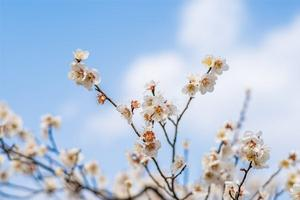 【梅好期待】春风暖金陵,万树梅花开。