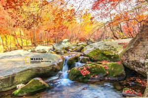 【我是达人】本溪枫之谷 拍红叶绝美圣地 带您走进枫林中的童话世界