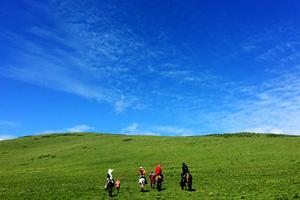 【春季大赏】6月去若尔盖草原,撒欢繁花陌上,好风景的吃货行