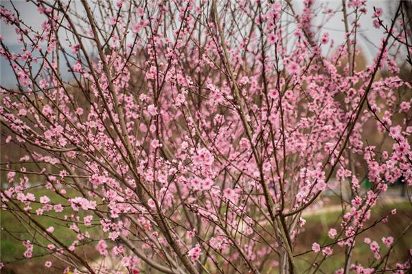 牡丹樱花世界游玩攻略(开放时间、门票、地址、交通)